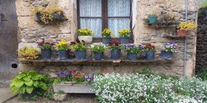 wallflowers1